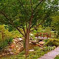 Japanese Garden Bridge by Amy Lucid