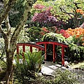 Japanese Garden Bridge With Rhododendrons by Carol Groenen