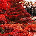 Japanese Garden by Douglas Barnard