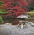 Japanese Garden by Eena Bo