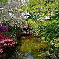 Japanese Garden In Bloom by Denise Mazzocco