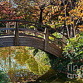 Japanese Garden In Fall by Iris Greenwell
