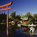 Japanese Garden by Jim Corwin
