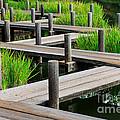 Japanese Garden Pier And Iris by Dan Richter