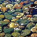 Japanese Garden Pool Rocks by Gary Olsen-Hasek