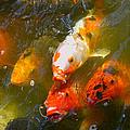 Japanese Gardens 9068 by Ricardo J Ruiz de Porras
