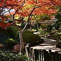 Japanese Gardens 9554 by Ricardo J Ruiz de Porras