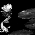 Japanese Koi Fish And Water Lily Flower Black And White by Jennie Marie Schell