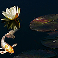 Japanese Koi Fish And Water Lily Flower by Jennie Marie Schell