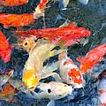 Japanese Koi Pond by Debbie Kelly