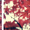 Japanese Maple Collage by Hannes Cmarits