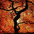 Japanese Maple During Autumn by Owen Luther