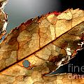 Japanese Maple Leaf Brown - 4 by Kenny Glotfelty