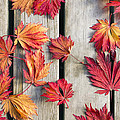 Japanese Maple Tree Leaves On Wood Deck by David Gn