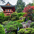 Japanese Tea Garden - Golden Gate Park by Adam Romanowicz