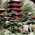 Japanese Tea Garden by Linda  Parker