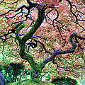 Japanese Tree In Garden by Athena Mckinzie