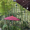 Japanese Umbrella by Eena Bo