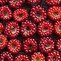 Japanese Wineberry Pattern by Tim Gainey