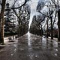 Jardin Des Plantes Paris France by Evie Carrier