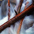 Jasper - Beauty Creek Logs by Terry Elniski