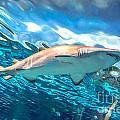 Jaws by Cheryl Baxter