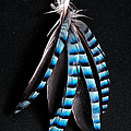 Jay Feather 2 Without Text by Weston Westmoreland