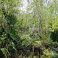 Jean Lafitte National Preserve Swamp Louisiana by Lizi Beard-Ward