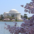 Jefferson Memorial - Cherry Blossoms by Mike McGlothlen