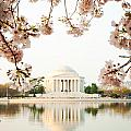 Jefferson Memorial With Reflection And Cherry Blossoms by Susan Schmitz