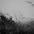 Jekyll Deer In Black by Laurie Perry