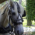 Jekyll Horse by Laurie Perry