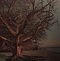 Jekyll Island Sunset by Michael Carriero