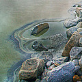 Jekyll Island Tidal Pool by Betsy Knapp