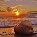 Jelly Fish Sunrise Avon Pier 1 1/15 by Mark Lemmon
