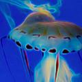 Jellyfish 2 Digital Artwork by Ernie Echols