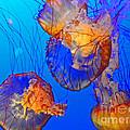 Jellyfish IIi by Elizabeth Hoskinson