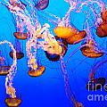 Jellyfish In Abundance by Vivian Christopher