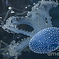 Jellyfish In Blue by Diego Re