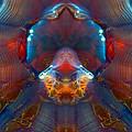 Jellyfish by WB Johnston