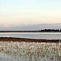 Jepson Prairie Vernal Pools by Juan Romagosa
