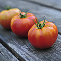 Jersey Tomatoes  by Terry DeLuco