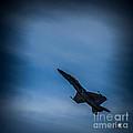 Jet Up by Ronald Grogan