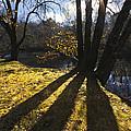 Jewel In The Trees by Debra and Dave Vanderlaan