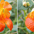 Jewelweed Flower In Stereo by Duane McCullough