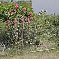 Jo Jo's Garden 3 by Liz Santie