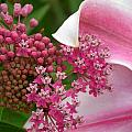 Asclepias And Friend by Cynthia Wallentine