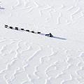 John Bakers Team Running Down Frozen Yukon River  by Jeff Schultz
