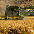 John Deer by Robert Bales