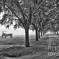 John Deer Tractor And The Avenue Of Oaks by Scott Hansen